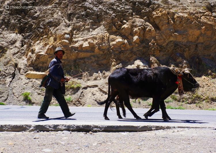 Tibet 04