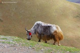 Tibet 09